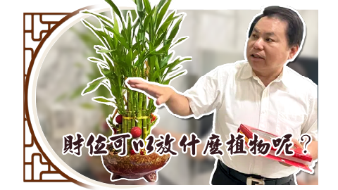 財位可以放什麼植物呢?---張定瑋老師